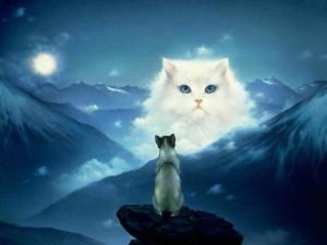 Усыпление животных - кот и собака
